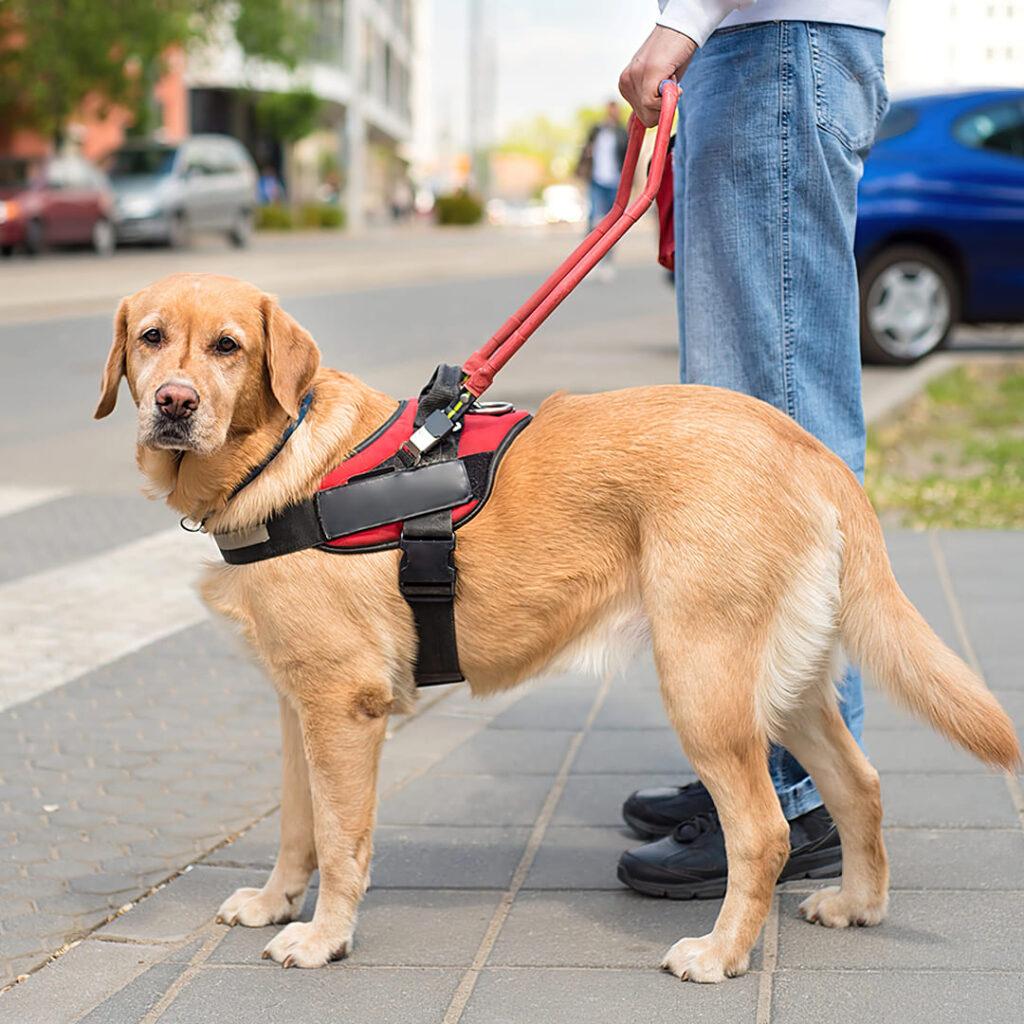 Pessoa cega com cão-guia