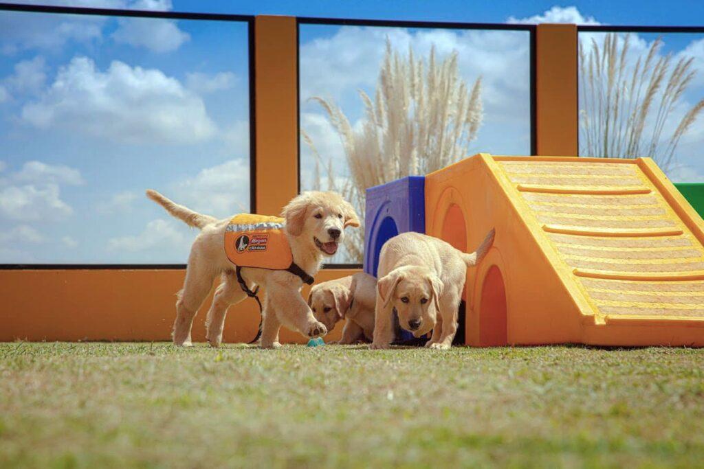 Cães do Instituto Magnus, com descrição na legenda, do Dia Internacional do Cão-Guia 2021.