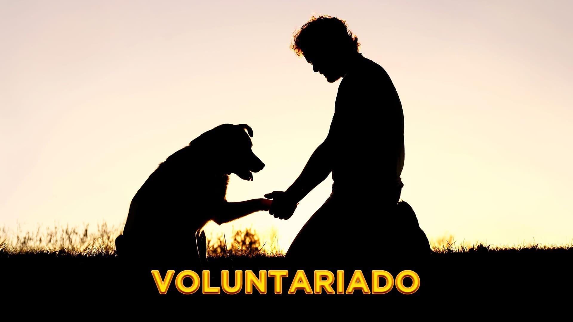 Silhueta de uma pessoa e um cão, ilustrando o Dia Nacional do Voluntariado 2021. Descrição detalhada na legenda.